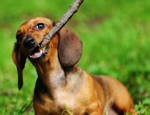 Majitelia psov – UPOZORNENIE!