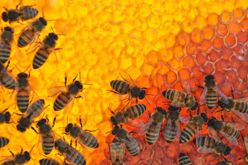 100. výročia založenia Ústredia včelárskych spolkov na Slovensku